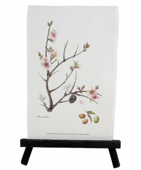 Herbier Prunus dulcis
